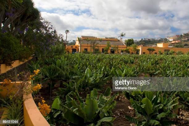 Gran Canaria Canary Islands Rural Hotel La Hacienda del Buen Suceso Arucas