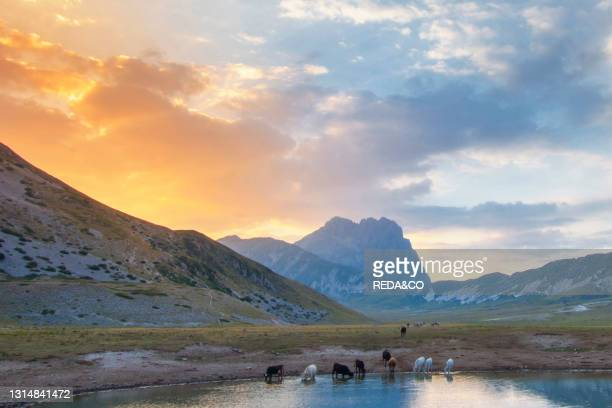 Gran Sasso National Park.View of Pietranzoni Lake. Grazing cows. Campo Imperatore. L'Aquila. Abruzzo. Italy. Europe.