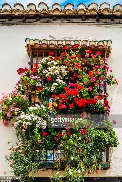 Granada, Spanien, ESP, Andalusien, al-Andalus, Hochburg der andalusisch-maurischen Kultur, Albaicín, UNESCO Weltkulturerbe, Aufnahmedatum:2017,