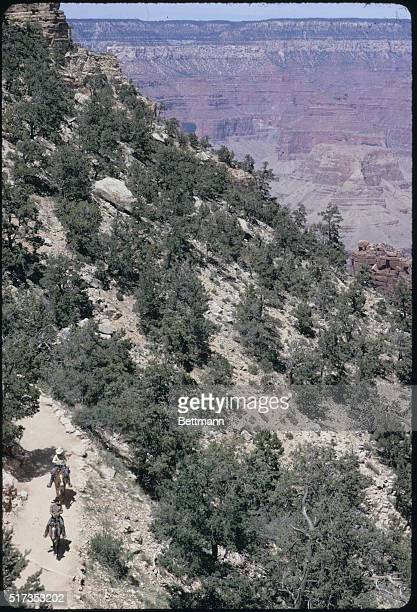 Vacationers atop mules make their way along Bright Angel Trail a ninemile ride that drops from an elevation of 7000 feet to 2400 feet on a steep...
