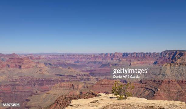 grand canyon national park north rim scenic landscape, arizona, usa - canyon stock pictures, royalty-free photos & images