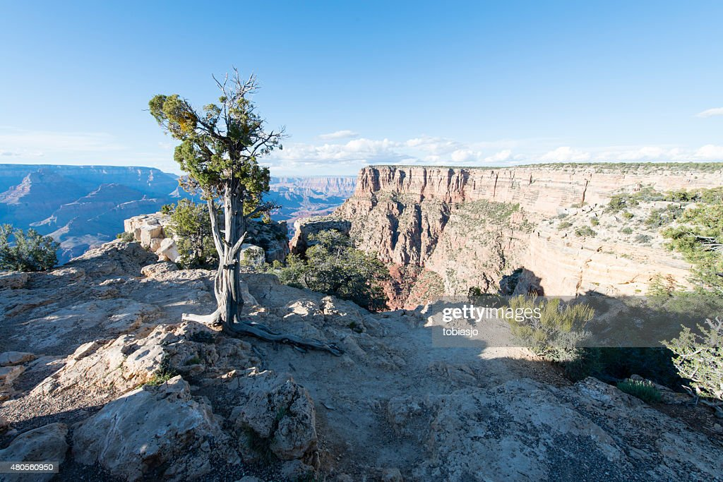 Grand Canyon National Park : Stock Photo