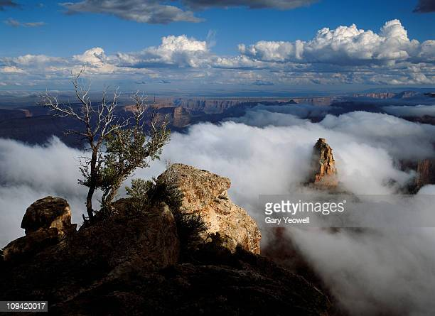 grand canyon shrouded in mist - yeowell foto e immagini stock