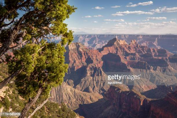 grand canyon south rim, dramatic landscape at sunrise  – arizona, usa - juniper tree stock pictures, royalty-free photos & images