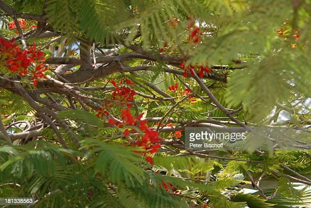 Grand Hyatt-Hotel, Kauai, Hawaiian Island, Insel, Süd-Pazifik, Poipu-Beach, Pflanze, Blüte, Baum, Natur, Reise, TP, DIG;P-Nr.: 1335/2007, ;