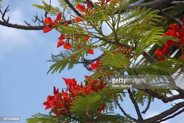 Grand HyattHotel Kauai Hawaiian Island Insel SüdPazifik PoipuBeach Pflanze Blüte Baum Natur Reise TP DIGPNr 1335/2007