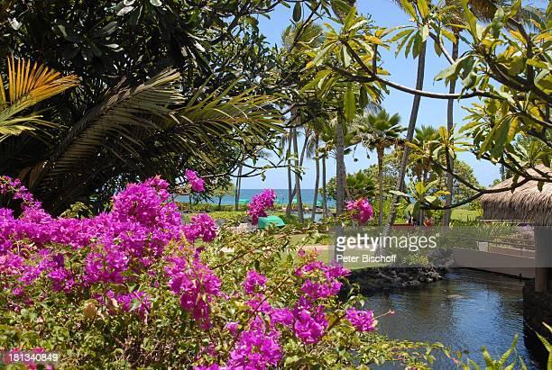 Grand HyattHotel Kauai Hawaiian Island Insel SüdPazifik PoipuBeach Orchideen Orchidee Pflanze Blüte Natur Reise TP DIGPNr 1335/2007