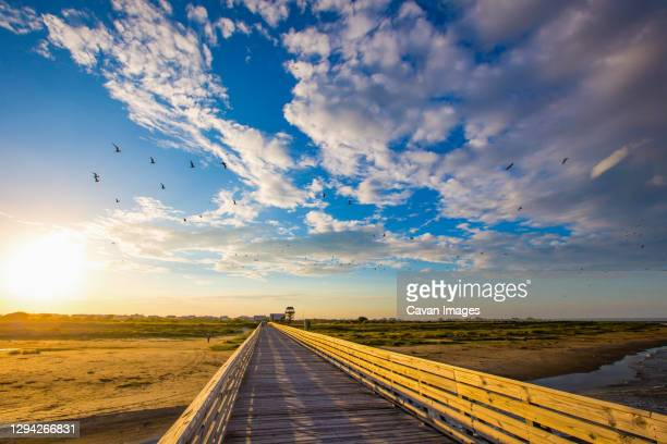 grand isle, louisiana beauty images during sunset - gulf coast states stock pictures, royalty-free photos & images
