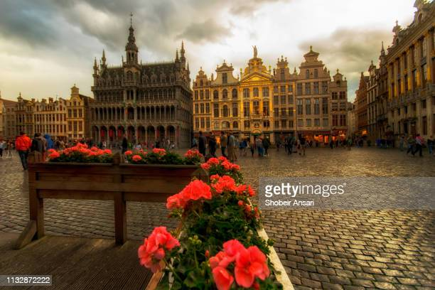 grand place, brussels - flowering plant stock pictures, royalty-free photos & images