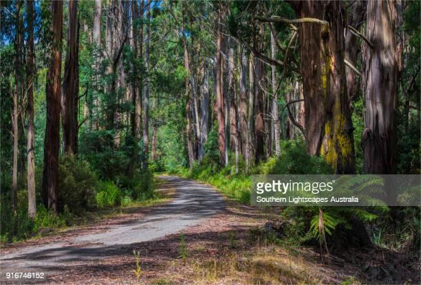 grand ridge road, strzelecki ranges, south gippsland. - victoria australia stock pictures, royalty-free photos & images