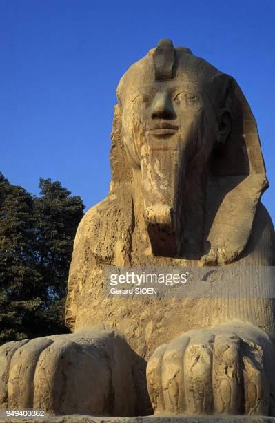 Grand sphinx en albâtre à Memphis, en Egypte.