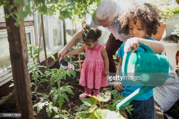 grandad is the best gardening teacher - vanguardians stock pictures, royalty-free photos & images