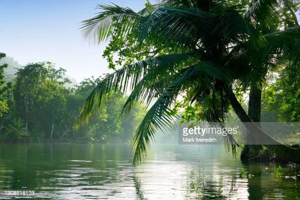 grande riviere river - トリニダードトバゴ共和国 ストックフォトと画像