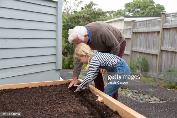 grandfather and child planting seeds in garden - new zealand stock pictures, royalty-free photos & images