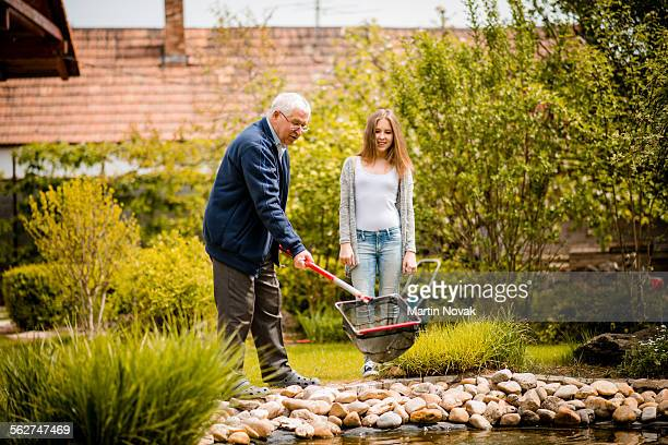 Grandfather and granddaughter cleaning fish pond