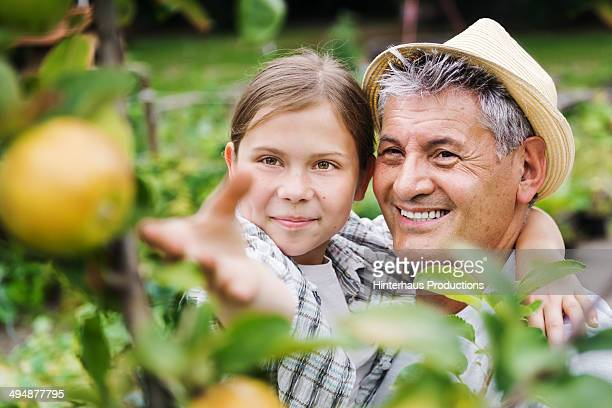 Grandfather And Granddaughter Harvesting Apples