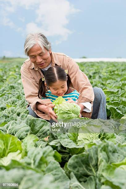 grandfather and granddaughter in field - kanagawa prefecture stock pictures, royalty-free photos & images