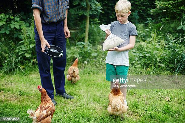 Grandfather and Grandson feeding the chickens