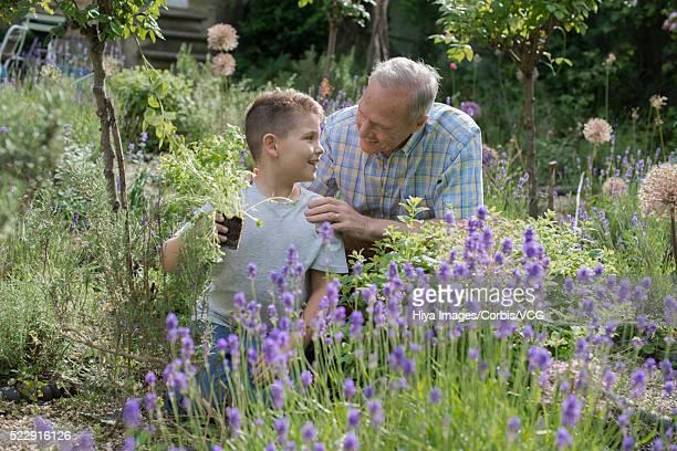 Grandfather and grandson (10-12 years) gardening in backyard