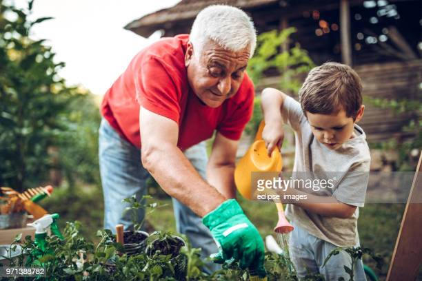 grandfather and grandson in garden - senior adult stock pictures, royalty-free photos & images