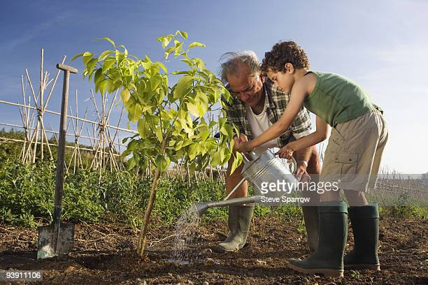 Grandfather and grandson planting tree