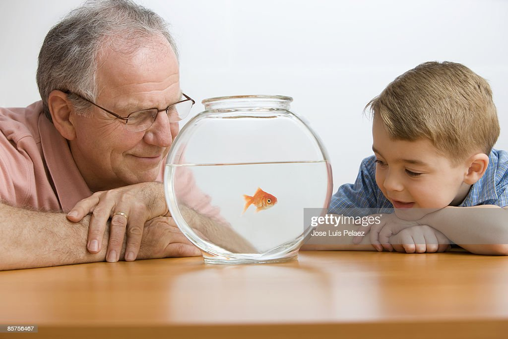Grandfather and grandson watching goldfishes  : Foto de stock