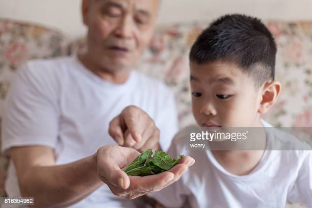 Grandfather introducing grandson to silkworm