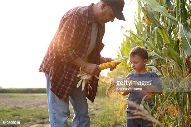 grandfather showing his grandson ear of corn - corn stock pictures, royalty-free photos & images