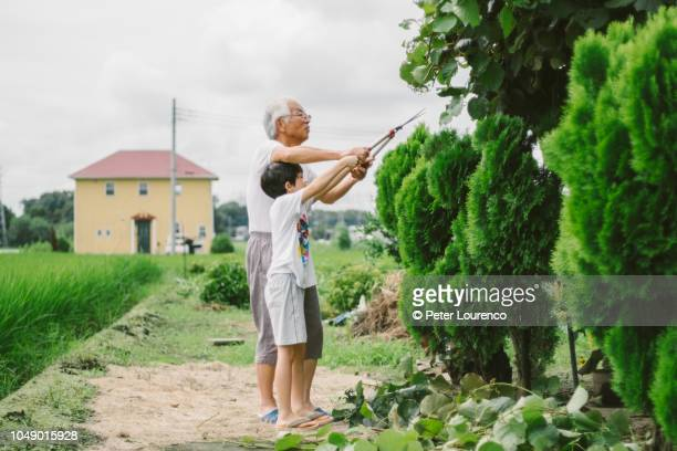 Grandfather teaching grandson the use of garden shears