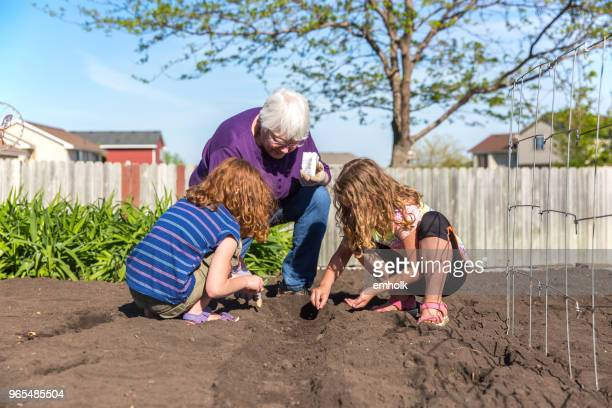 grandma & granddaughters planting green beans in garden - seed stock pictures, royalty-free photos & images