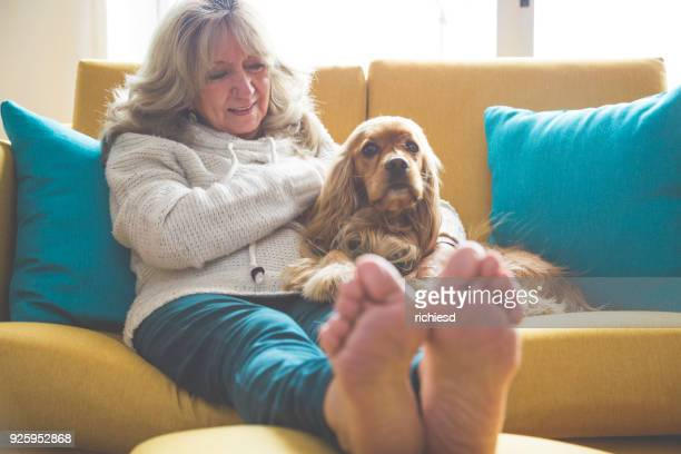 grandma playing with her dog - cocker spaniel stock photos and pictures