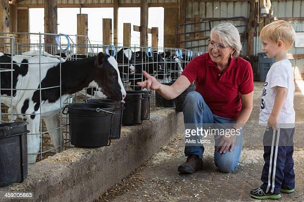 Grandma shows grandson calf on dairy farm