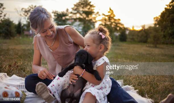 grandmother and granddaughter enjoying with little dog - one animal stock pictures, royalty-free photos & images