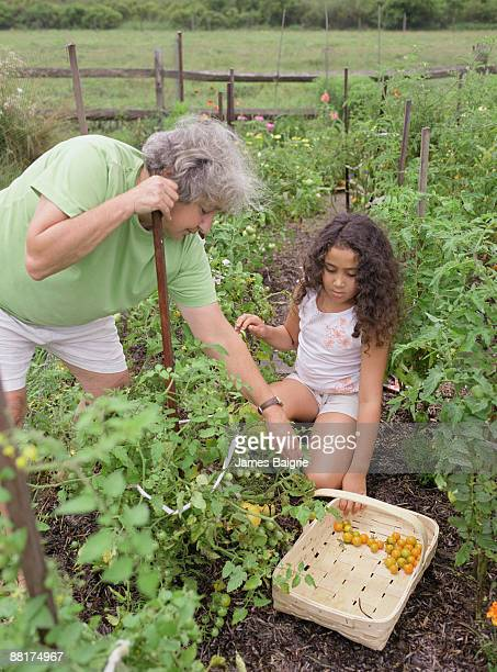 grandmother and granddaughter gardening together - older woman bending over stock pictures, royalty-free photos & images