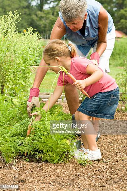 Grandmother and Granddaughter Working in Garden