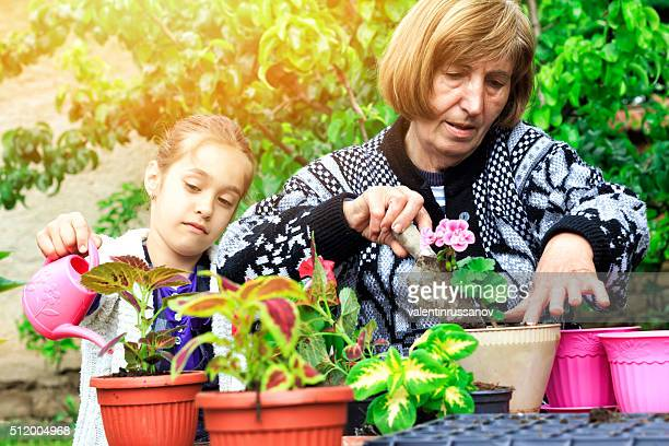 Grandmother and granddauther watering ant plant flowers in pot