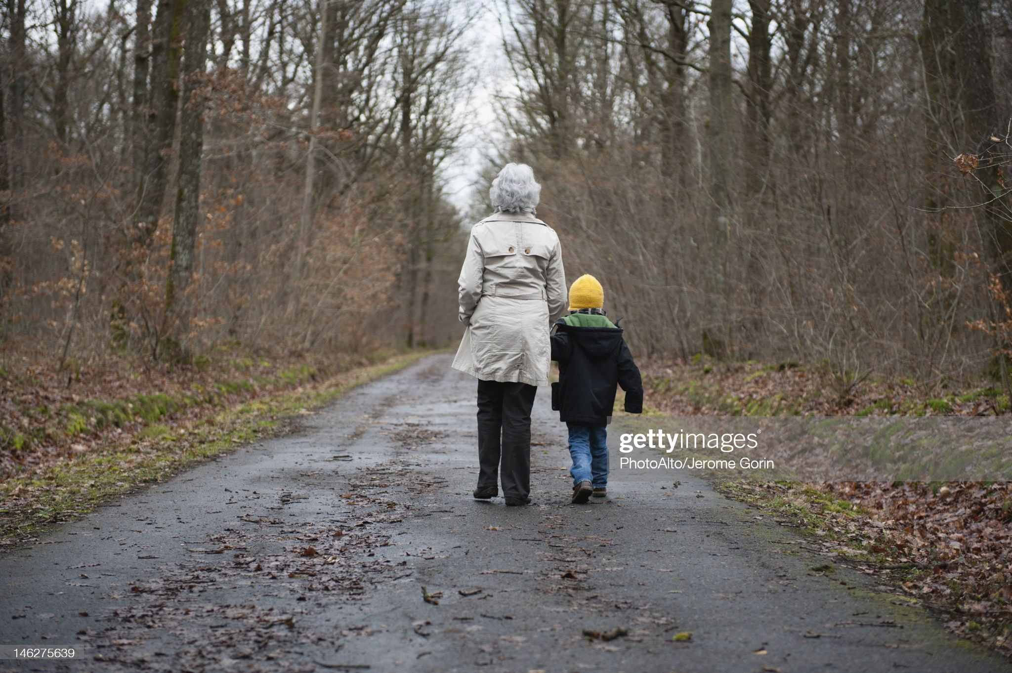 Grandmother and grandson walking in woods, holding hands, rear view : Stock Photo
