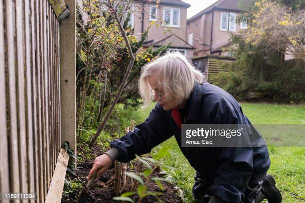 grandmother gardening - one senior woman only stock pictures, royalty-free photos & images