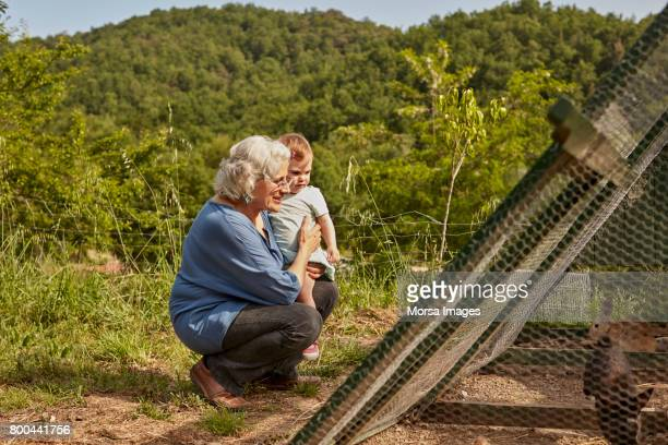Grandmother showing hens to toddler on sunny day