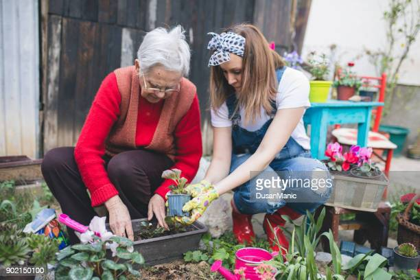 grandmother with her granddaughter working in the garden - narcissus mythological character stock photos and pictures