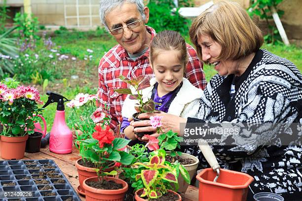 Grandparents and granddauther plant new flowers in pots