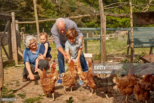 Grandparents with children feeding hens in coop