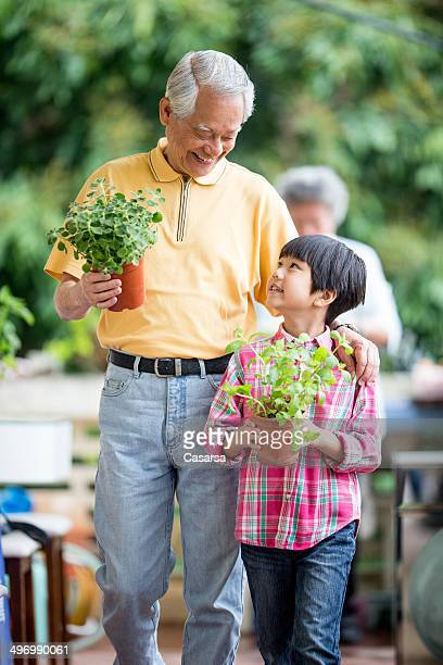 grandson and grandfather - mint plant family stock pictures, royalty-free photos & images