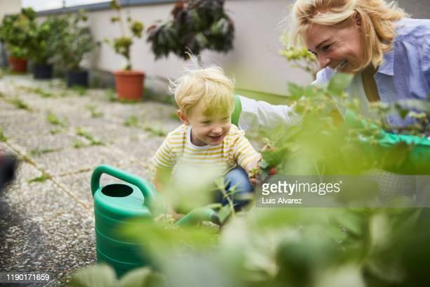 grandson assisting grandmother in garden - variable schärfentiefe stock-fotos und bilder