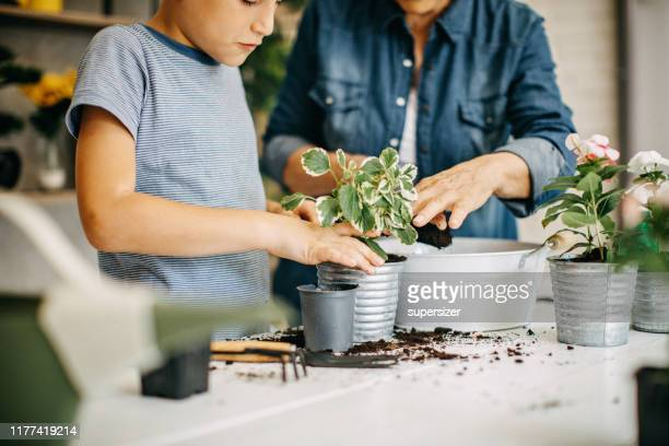 grandson helping grandma to plant - potting stock pictures, royalty-free photos & images