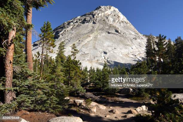 granite dome in the subalpine lodgepole pine forest. - john muir trail stock photos and pictures