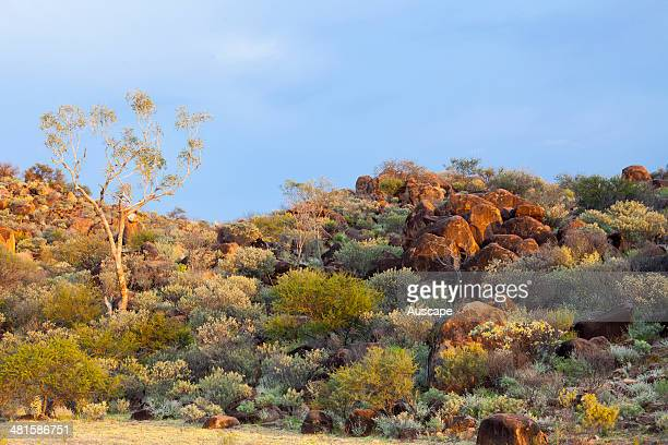 Granite tors with plants thriving after rain near Tibooburra Sturt National Park New South Wales Australia