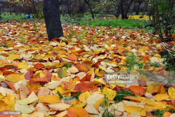 Granny's Orchard in Autumn