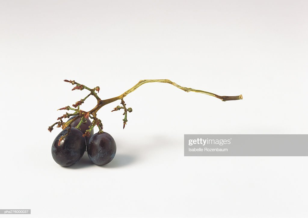Grape branch with three grapes : Stockfoto