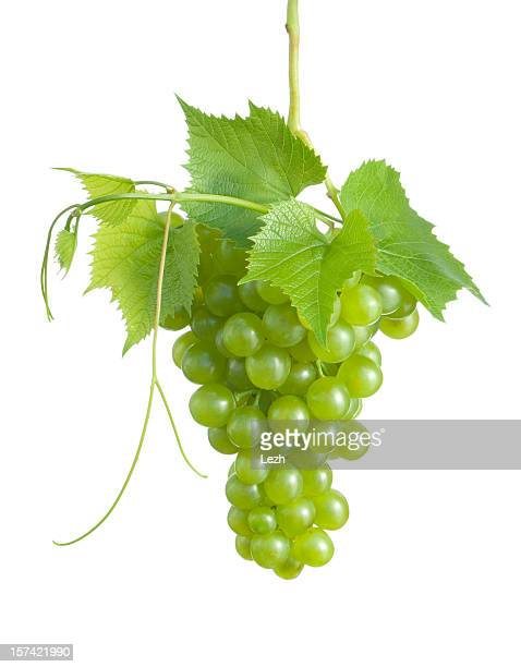 grape cluster - white grape stock photos and pictures
